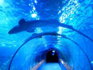 shark tunnel cineaqua Paris
