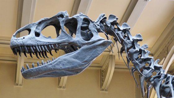 dinosaur museum berlin