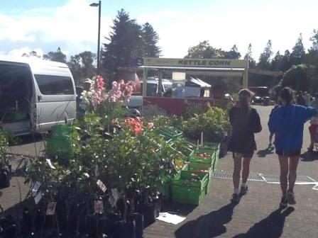 Saturday market Kuirau park