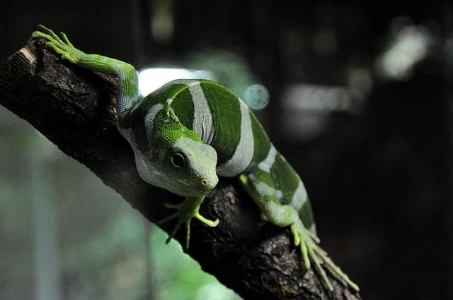 iguana kula park