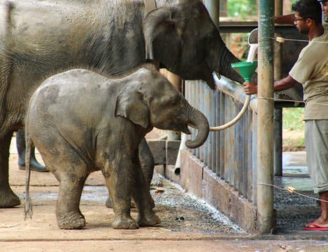 Udawalawe Elephnat orphanage
