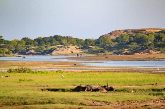 safari yala national park