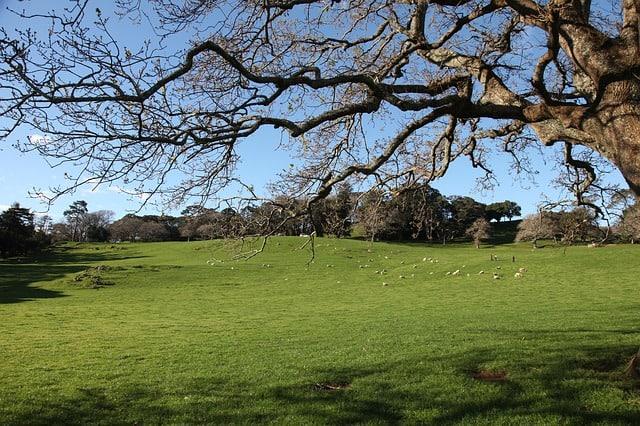 Auckland Cornwall park